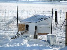 Tips For Keeping Your Chickens Alive In The Winter - http://www.ecosnippets.com/livestock-animals/tips-for-keeping-your-chickens-alive-in-the-winter/