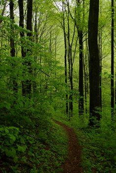Laurel Highlands Trail, Pennsylvania | by Shahid Durrani
