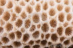 Coral Macro - Download From Over 37 Million High Quality Stock Photos, Images, Vectors. Sign up for FREE today. Image: 18287035