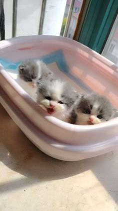 Baby Animals Super Cute, Cute Baby Cats, Funny Cute Cats, Cute Little Animals, Little Kittens, Cute Cats And Kittens, Cute Funny Animals, Kittens Cutest, Cute Dogs