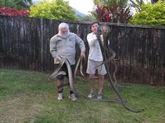 #CairnsSnakeRemovals provide a rapid, professional snake removal service at Cairns and surrounding areas. David Walton is specialized in venomous and poisonous snakes catching services. He also provides trapping and relocation of bush turkeys, scrub turkey, scrub fowls and native animals. Snake Removal, Poisonous Snakes, Removal Services, Feral Cats, Cairns, Turkey, How To Remove, David, Animals