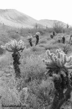 Cactus Skyline Photo