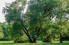 Sentier du domaine de Maizerets en été CRÉDIT PHOTO: Jean Verret Nature, Photos, Plants, Pathways, Landscapes, Pictures, Flora, Plant, The Great Outdoors