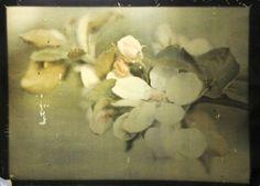 """rivesveronique: """" Šmirous Karel (1890 - 1981) Apple-blossom , autochrome """""""