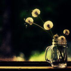 dandelion image by jo_0 - Photobucket