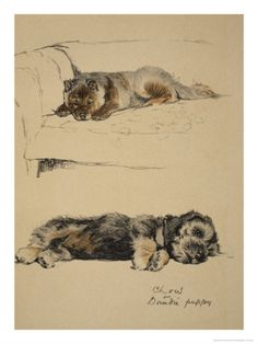 Chow and Dandie Puppy, 1930, Just Among Friends, Aldin, Cecil Charles Windsor Giclee Print by Cecil Aldin at Art.com