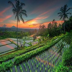 Snapchat 👻 'earthfocus' we are in Bali! Jatuliwith, Bali. Photo by: @ilhan1077 Explore. Share. Inspire: #earthfocus #beautifulpic #followback #amazingearth #awesome