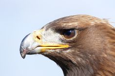 Powerful 🐦 . . . #bird #birds #natureshots #naturehippys #naturelife #naturelover #natureshot #naturelovers