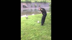 "Mother Goose thanks Cincinnati Police. ""She led me about 100 yards away to this grassy area near a creek. That's when I saw one of her babies all tangled up in some string from a balloon. His little feet were kicking,"" said Givens. ""She led me straight to him."" ""I told her to be careful, but she just walked over and untangled the baby. The mother goose just watched, like she knew. It was amazing.""Once the baby was untangled ... he rejoined his mom and swam away safely."""