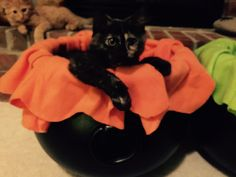 As the World Purrs: How to Make a Witch's Cauldron Cat Bed