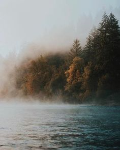 MacKenzie River Trail Oregon US|  Garrett King   | #adventure #travel #wanderlust #nature #photography