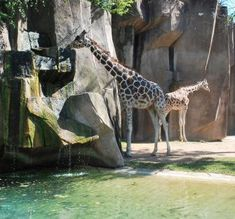 Top 10 things to do with kids in Milwaukee, including the Milwaukee County Zoo: http://www.midwestliving.com/travel/wisconsin/milwaukee/top-10-things-to-do-milwaukee-with-kids/