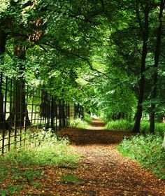 WYCHWOOD FOREST ~ England - Once part of larger Royal hunting grounds in Oxfordshire - People have reported activity here for years, such as the feeling of an unseen hand touching them on the shoulder - sights and sounds of a horse-drawn carriage carrying two sobbing children