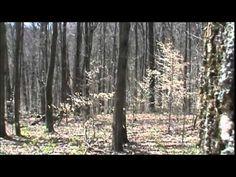 Deer Hunter Witnessed Bigfoot   BigfootBlogger.Com