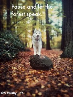 Pause and let the forest speak.