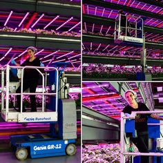 #verticalfarming with Veronica our Director of Agriculture on her #urbantractor. #urbanag #greenmission