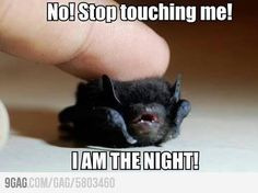 """Bats are nasty but the line """"I am the night!""""...genius"""