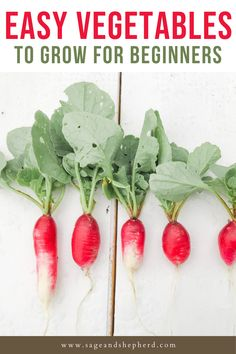 If you're starting a vegetable garden this season, you need to grow these top 8 easy vegetables for beginners. Starting A Vegetable Garden, Vegetable Garden For Beginners, Gardening For Beginners, Gardening Tips, Easy Vegetables To Grow, Raised Garden Beds, Garden Planning, Harvest, Top