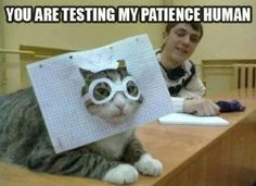 20 Pawsitively Hilarious Cat Memes That You Have to See - Cheezburger