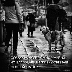 Laws Of Life, Street Dogs, Animals, Fictional Characters, Heart, Animais, Animales, Animaux, Animal