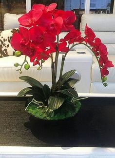 Amazing Orchid Arrangements Ideas To Enhanced Your Home BeautyFaux red orchid centerpiece including three orchid stems, raindeer moss, and phalaenopsis leafs.Resultado de imagen para orchid piece wood - my siteMira lo que he encontrado en AliExpressO Red Orchids, Orchids Garden, Orchid Plants, Roses Garden, Orchid Flowers, Fruit Garden, Purple Roses, Most Beautiful Flowers, Exotic Flowers