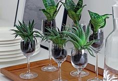 Mini Suculentas e espadinhas Succulent Gardening, Succulents Garden, Container Gardening, Planting Flowers, Succulents In Glass, Tropical Centerpieces, Centrepieces, Wedding Centerpieces, Antique Tea Cups