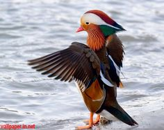 Colorful Lovely Birds HD Wallpaper Free download for Laptop -