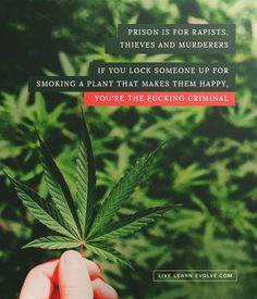 """If you lock someone up for smoking a plant that makes them happy, you're the fucking Criminal- Joe Rogan Ju Jitsu, Healthy Facts, Joe Rogan, Smoking Weed, Funny Me, Powerful Words, Health And Safety, Great Quotes, Drugs"