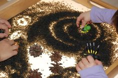 Flax seed, pine cones, and plastic insects on the light table
