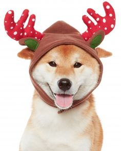 It's a reindog! Dress your pet in the #MarthaStewartPets Reindeer Antlers this holiday, and let the games begin.