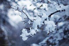 from David Khelashvili Photography  fb