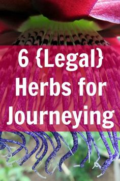 Herbs that can help your body get into the meditative state needed for shamanic journeying, psychic revelation, and divination.