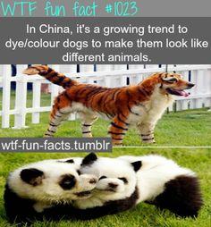 Fact 1023