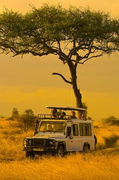 Touring Serengeti National Park, Tanzania