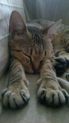 El sofá es mio humanos