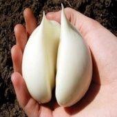 Tohle ničí zánět prostaty za 3 dny! Všichni muži