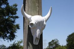 Faux Cow Skull / Faux Taxidermy / Longhorn / by 2CountryChics