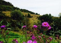 I PADDOCK COME GIARDINIEcotourism Podere Borgo di Vigoleno® « Ecotourism Podere Borgo di Vigoleno® Farmers Market, Shop, Plants, Farmers' Market, Planters, Plant, Store
