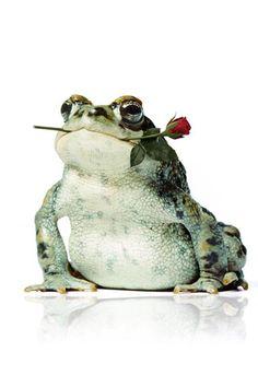 Frog Lover...