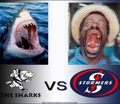 Rugby supporters at their best! Bull Images, Rugby Sport, Best Dogs, South Africa, Afrikaans, Sharks, Funny, Pictures, Blue