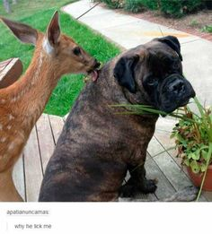 Deer Doesn't Care About Your Personal Space
