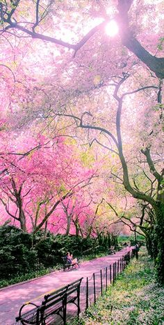 The Conservatory Garden in Central Park ~ NYC, New York – USA