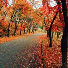 서울대공원 가을단풍 seoul  grand park