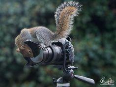wildlife photographer of the year - Buscar con Google