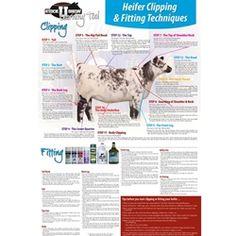 48 trendy dairy poster for Livestock Judging, Showing Livestock, Showing Cattle, Large Animals, Animals For Kids, Show Cattle Barn, Cow Tipping, Show Cows, Raising Cattle