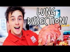 What's inside the lungs?   Lung Dissection   At-Bristol Science Centre - YouTube
