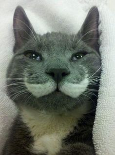 Look at that mustache! !