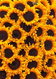 Cute Backgrounds, Phone Backgrounds, Wallpaper Backgrounds, Wallpapers, Shades Of Yellow, Color Shades, Growing Sunflowers, Sunflower Pictures, Sunflower Wallpaper