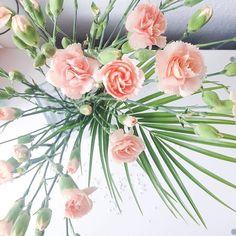 I  Flowers  Ich wünsche euch einen wunderschönen Samstag ☺️ #flowers #lifestyle #lifestyleblog #blumen #floweroftheday #floweraddict #blumenliebe #aldiblumen #aldi #blogger #beautyblog #beautyblogger #beautyblogger_de #instablogger #pastell #nude