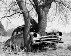 Tree grows through an abandoned car - Nature reclaims ther own in whatever form. Abandoned Buildings, Abandoned Houses, Abandoned Places, Abandoned Vehicles, Rust In Peace, Rusty Cars, Growing Tree, Old Trucks, Old Cars